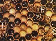 六角形的蜂巢